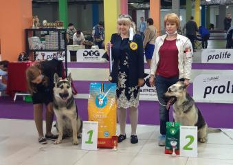 Выставка собак 29 августа