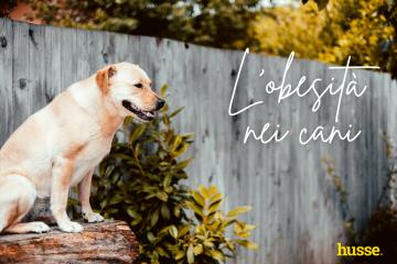 L'obesità nei cani. Aiuta il tuo amico a 4 zampe a tenersi in forma