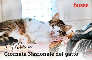 17 Febbraio: Giornata Nazionale del Gatto