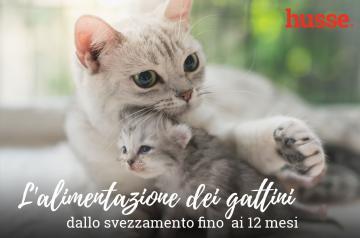 L'alimentazione dei gattini: dallo svezzamento fino ai 12 mesi