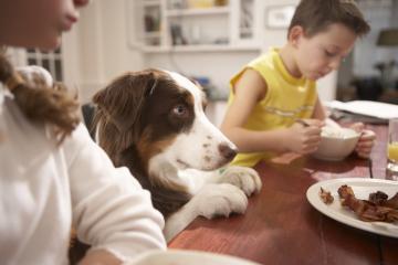 Харчова алергія у собак