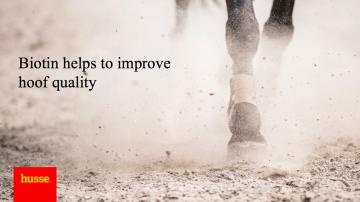 ¿Por qué la biotina es un ingrediente importante en la alimentación de los caballos?