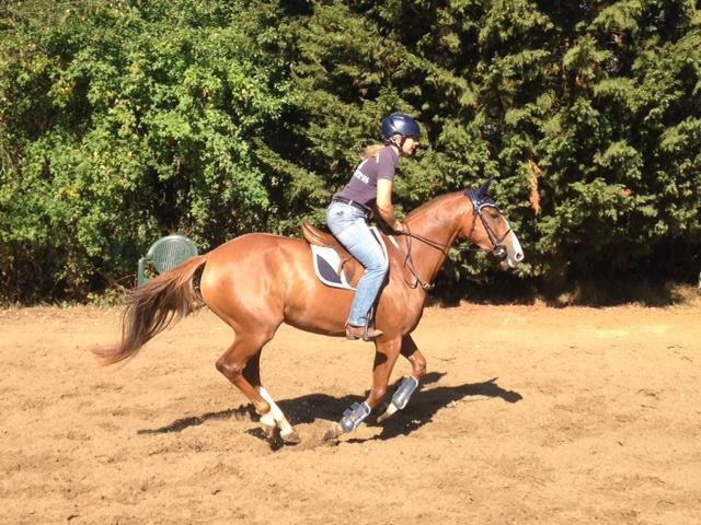 Vanessa, très satisfaite de la gamme de phytothérapie pour chevaux husse