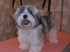 Happy Tails Grooming in Basingstoke, Hampshire