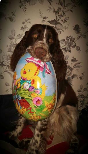 Glad påsk till Er på Husse