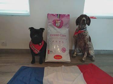 Nos chiens sont nourris avec vos croquettes depuis 3 ans