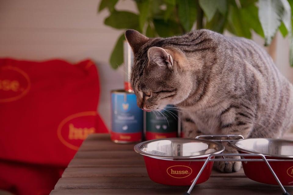 konzervirana hrana za mačke
