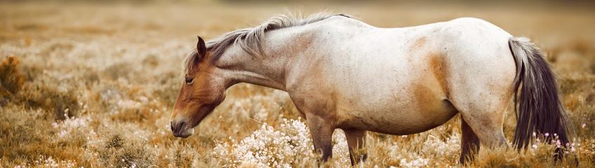 fragor-och-svar Häst