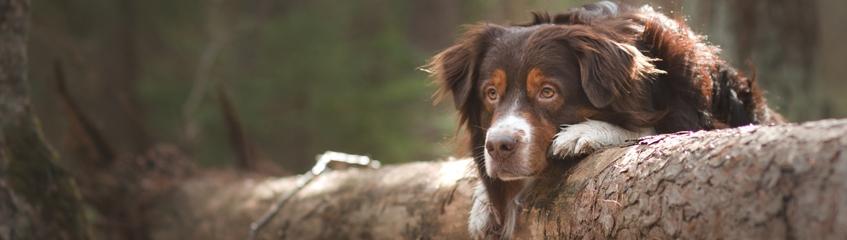 fragor-och-svar Hund