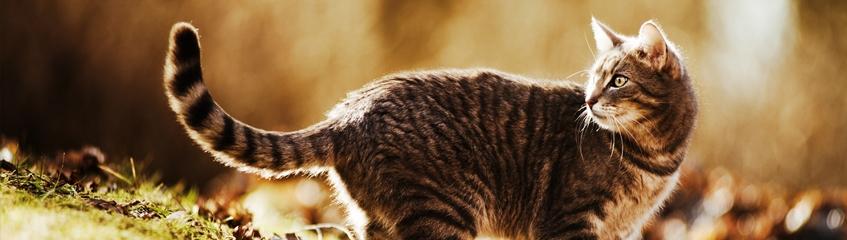 fragor-och-svar Katt