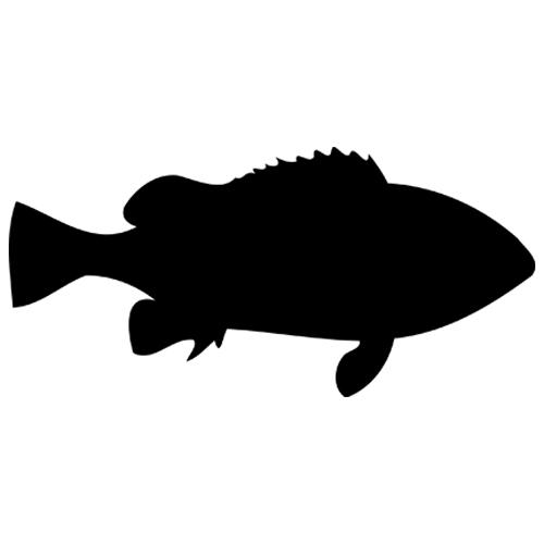 Fish based Vector