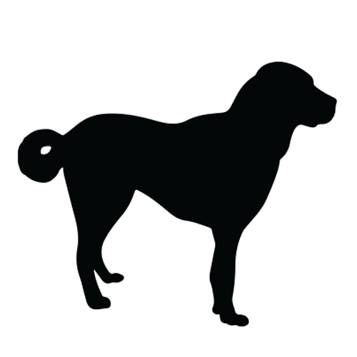 Sterilized Dog Vector