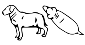 Obese Dog Vector