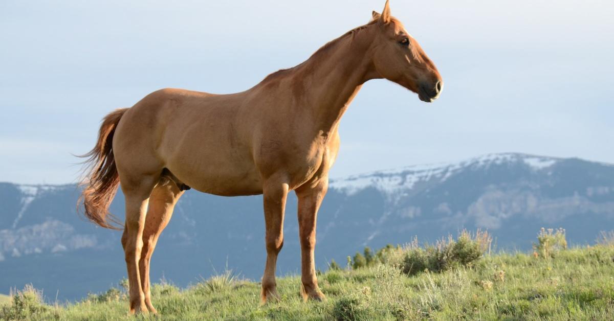 cheval blog husse