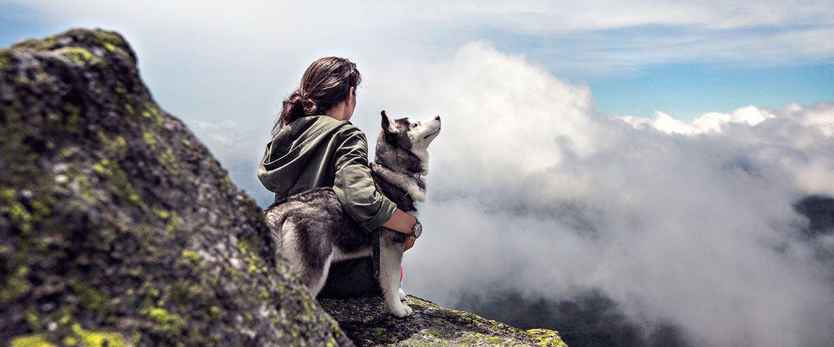 Histoire du chien husky