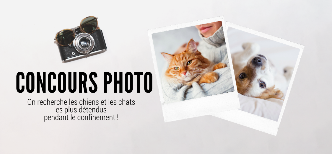 concours photo chien chat husse