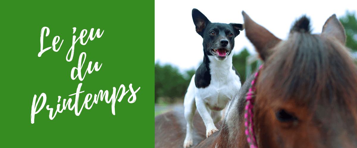 Gagnez des vermifuges naturels pour chien chat chevaux