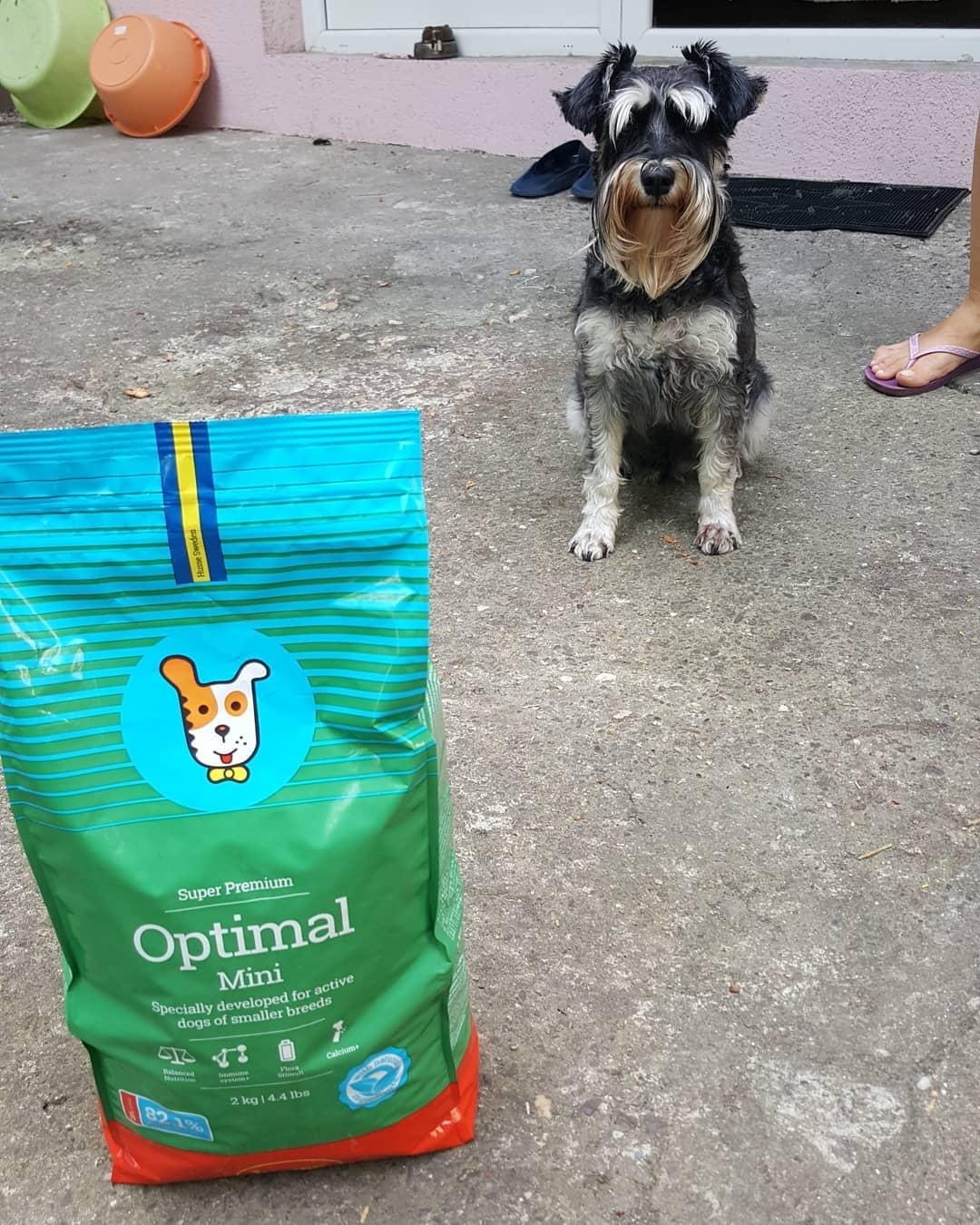 Nouriture pour chiens actifs de petites races