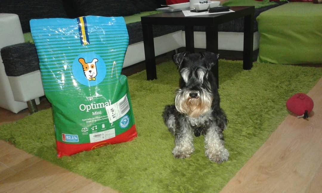 nourriture pour chiens actif de petites race husse