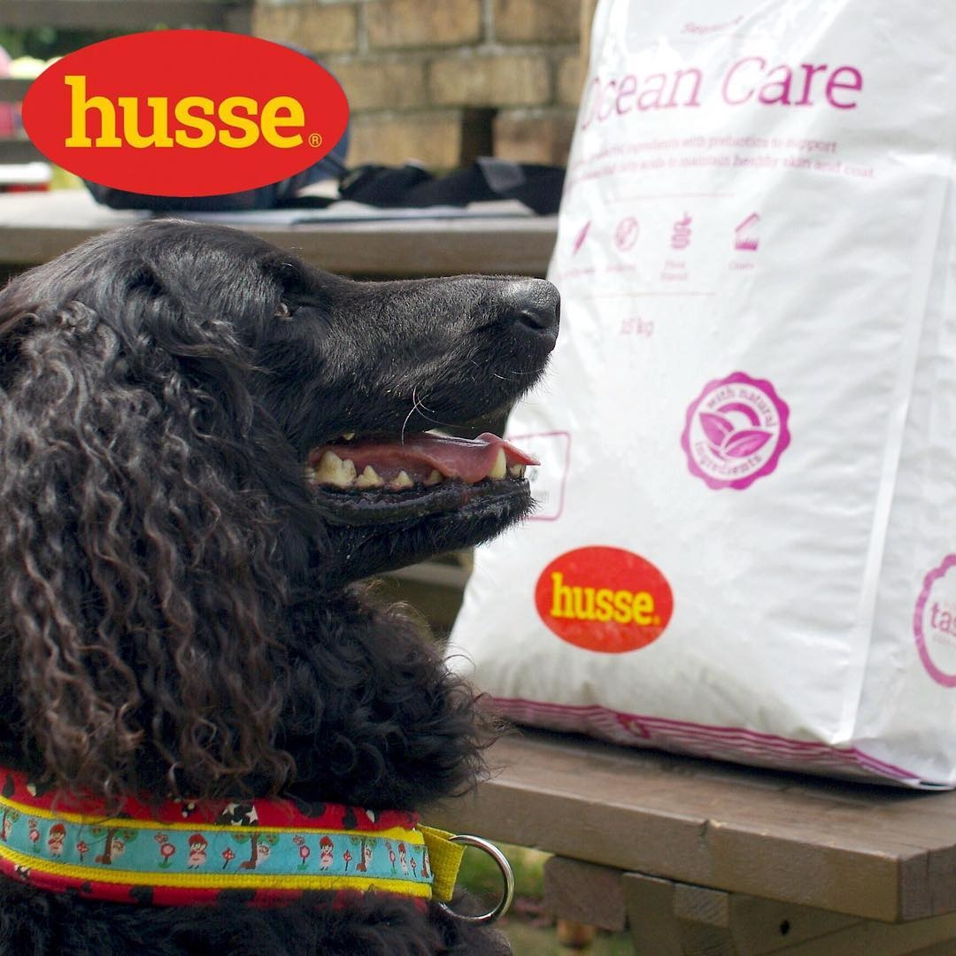 nourriture hypoallergénique pour chien husse