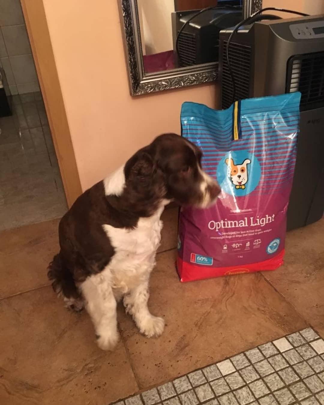 optimal light nourriture pour chiens actifs en surpoids husse