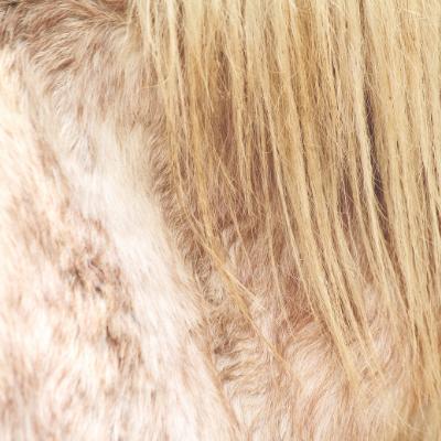 prendre soin poil et crin cheval hiver