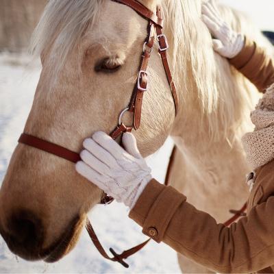 prendre soin cheval hiver cure