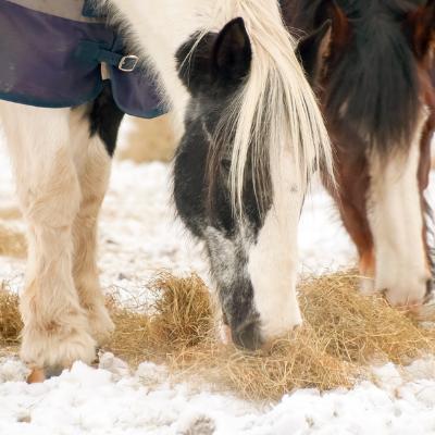 Alimentation hiver cheval