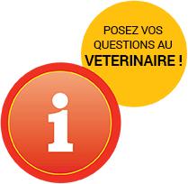 Questions au vétérinaire husse