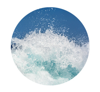 soin oreilles chien eau de mer